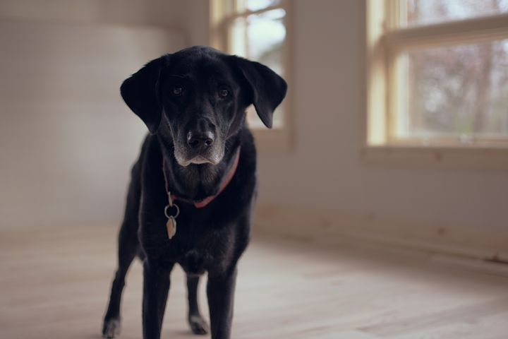 It was, he had decided, the perfect solution so that he, his wife and their dog Hannah could all grow older together without having to worry about the need for care.